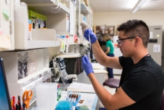Rheumatology researcher in the lab at the University of Colorado Denver.